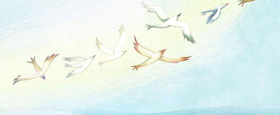 banner-oiseaux